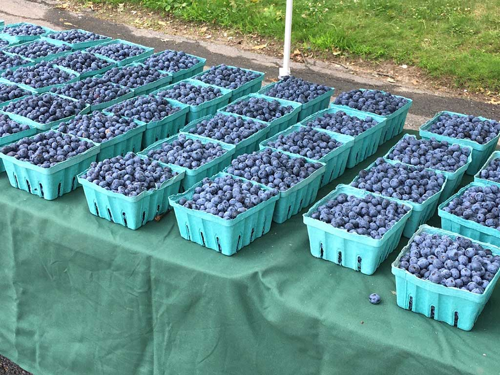 West End News - high-bush blueberries from Merrifield Farm, Cornish, ME