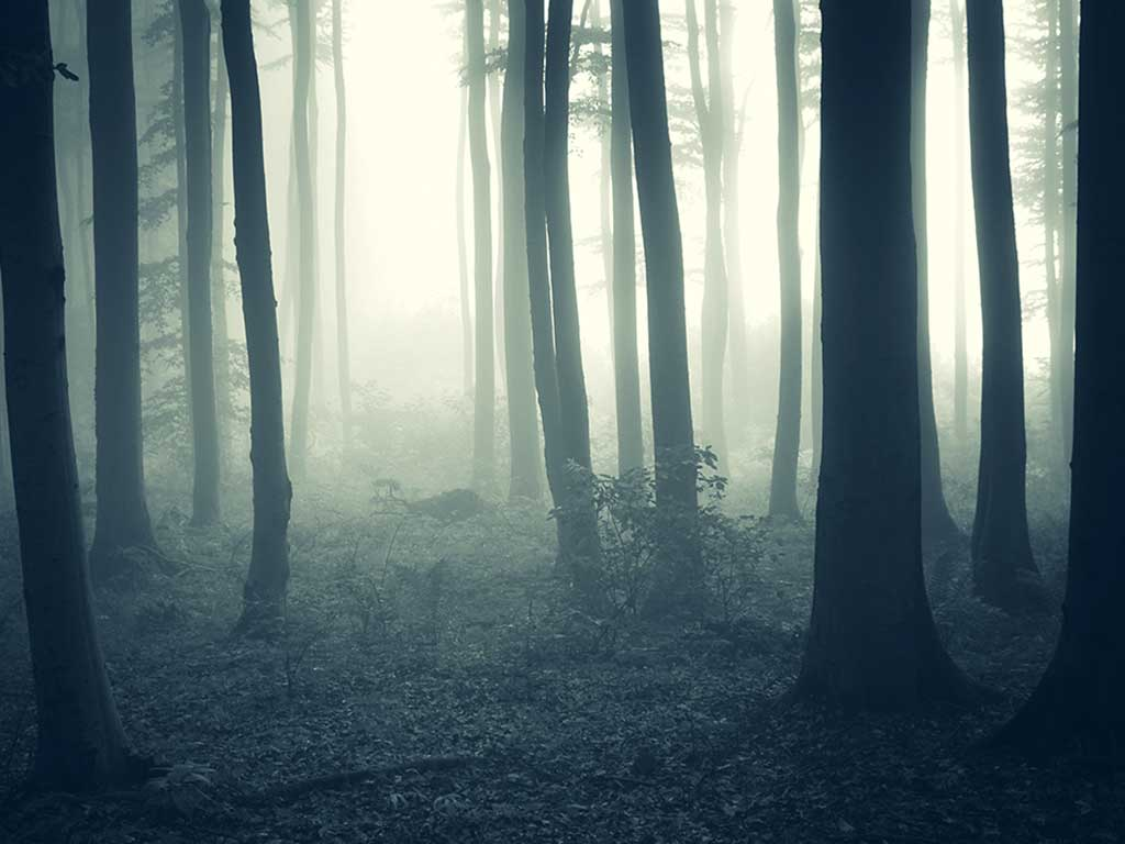 West End News - Halloween spooky forest stock