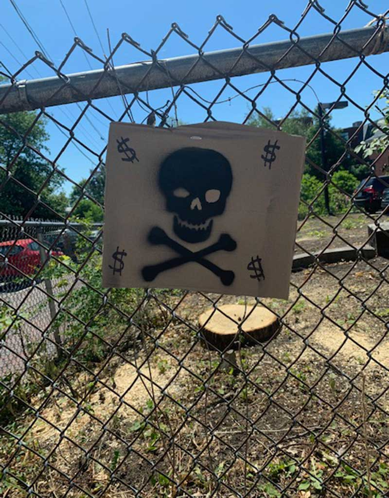 West End News - Skull and crossbones sign protests cutting of linden trees -  Spurs creation of heritage tree ordinance