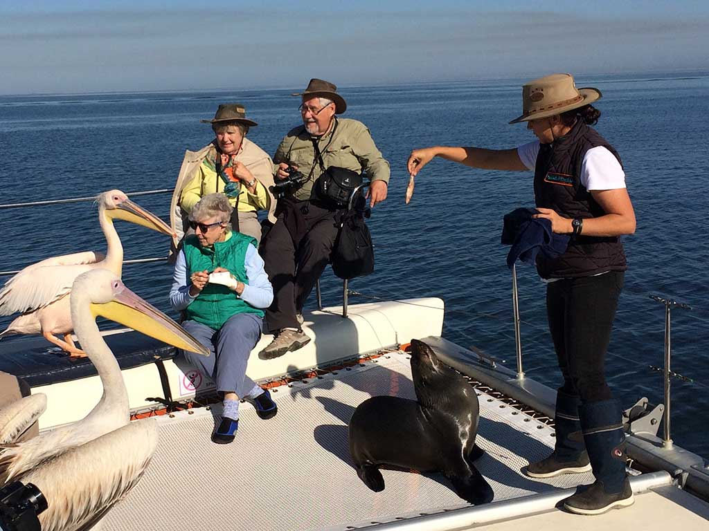 Tour group meets pelicans and feed seal with guide