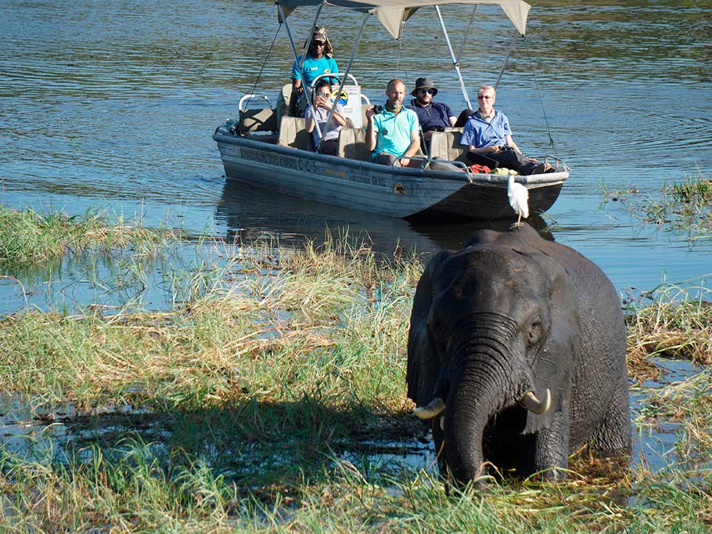 Tour group viewing elephant on the Chobe River in Botswana.